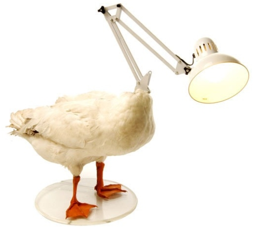 chickenlamp